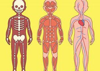 Unser Körper: Der Lernspaß für Kinder von Katie Stokes